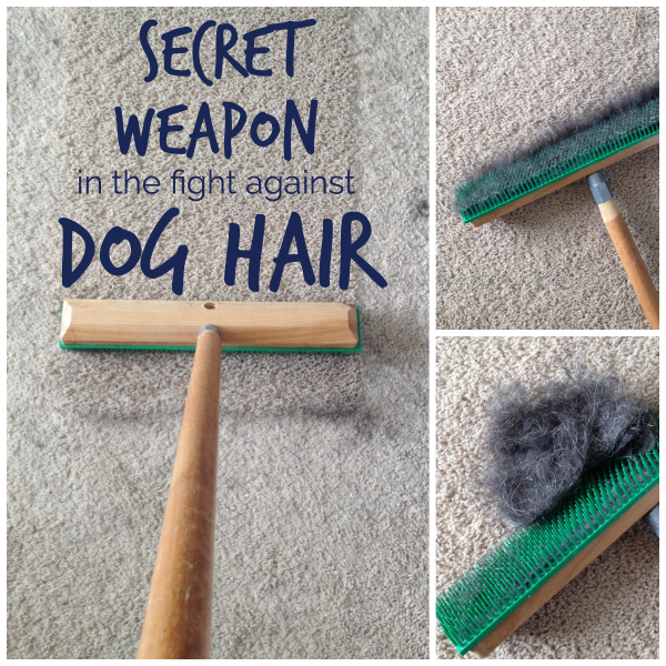 The easiest way to remove the most dog hair from carpet | www.tealandlime.com