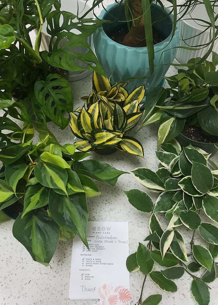 Plant gift idea for new homeowners